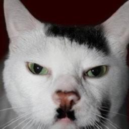 на немецком о котах