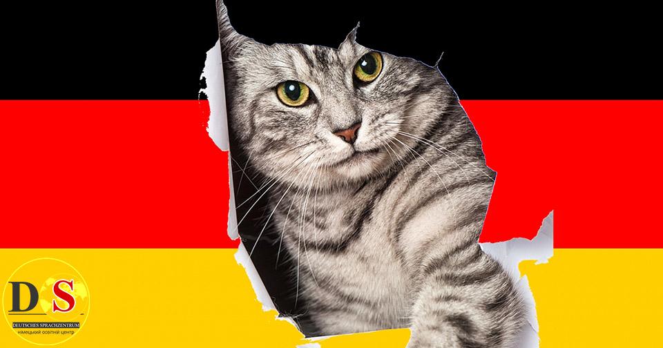 Коти в Німеччині